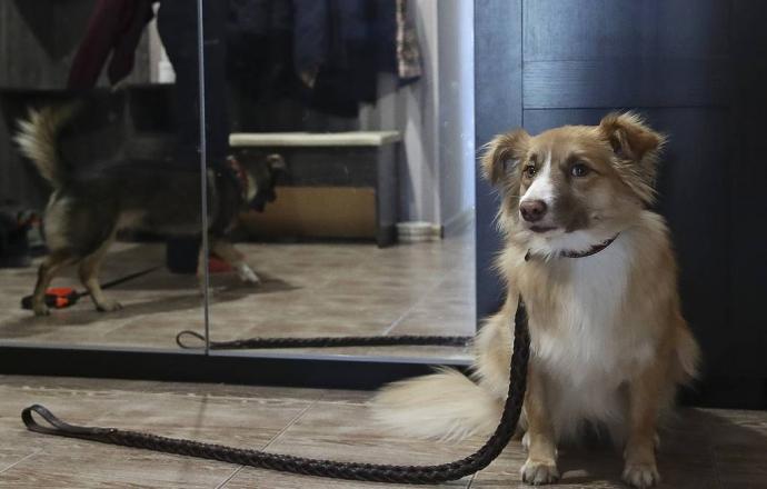 Путин подписал закон о запрете на изъятие домашних животных за долги   Новости  