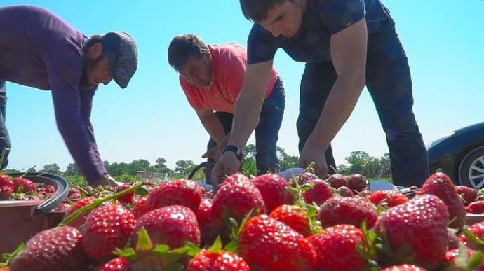 В Дагестане создадут «Школу фермера» | Новости |